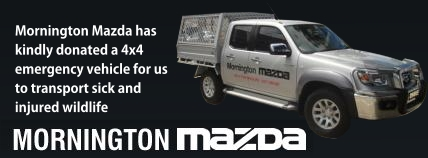 4x4 on loan from mornington mazda